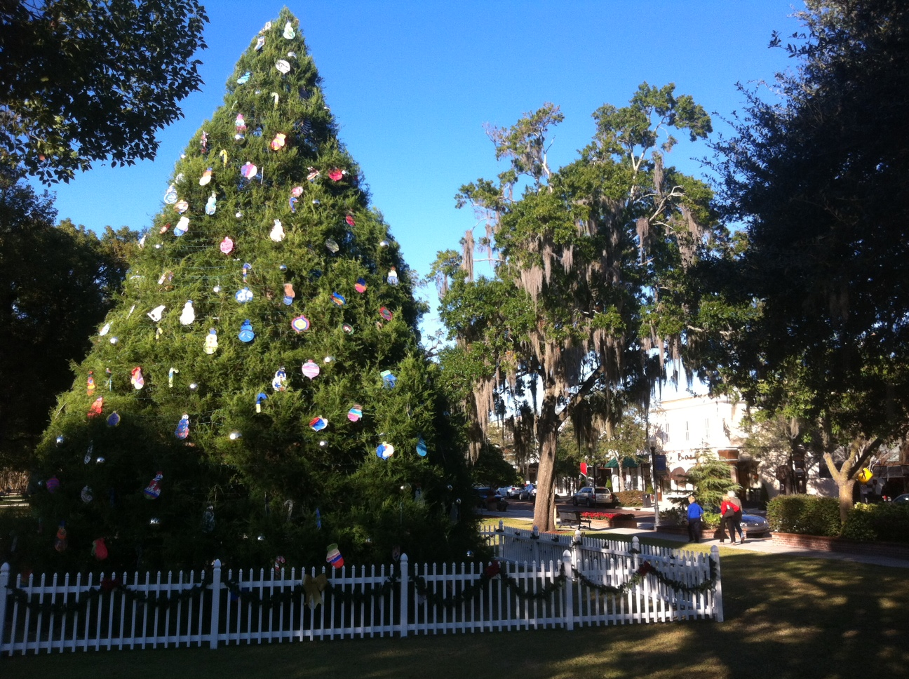 Winter Park Tree Lighting