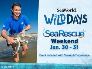 wild-sea-rescue