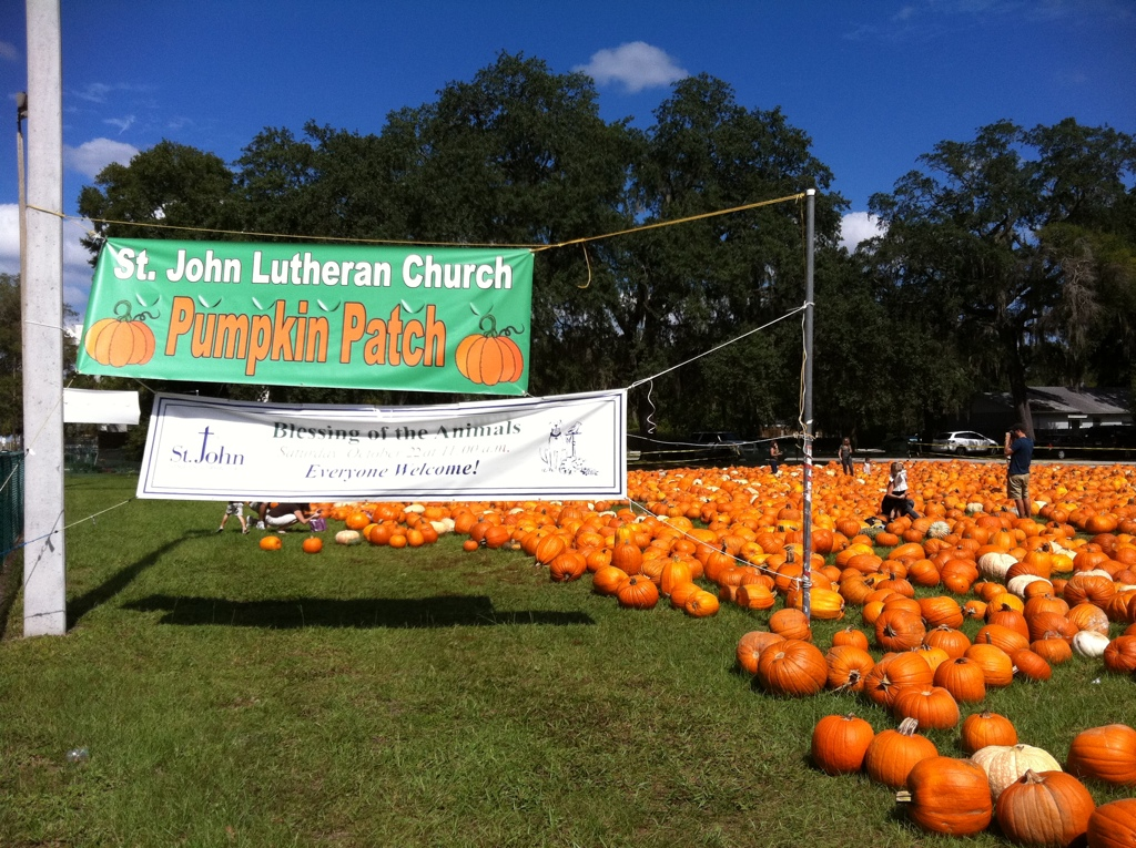 Remembering the Halloween Pumpkin Patch at St John Lutheran Church
